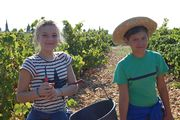 Traditional September harvest picnic at the winegrower's