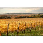 Couleurs d'automne dans les vignes